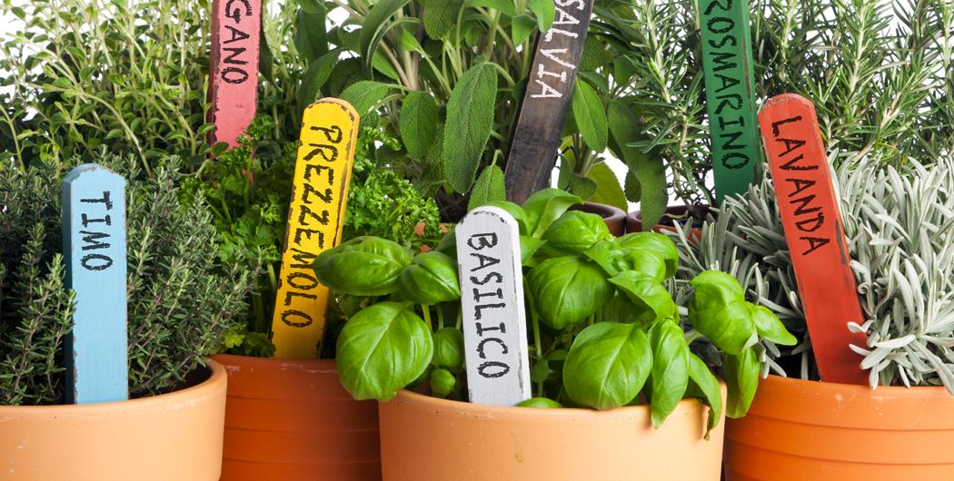 Profumiamo l orto con piante aromatiche parrocchia for Semina cipolle